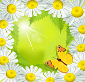 Vector frame of daisies with a butterfly Royalty Free Stock Image