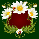 Vector frame with daisies in the shape of floral beast face Stock Images