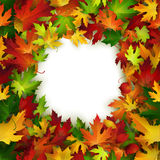 Vector frame design with colorful autumn leaves Stock Photos