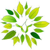 Vector frame of green leaves Royalty Free Stock Photo