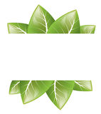Vector Frame of green leaves on a white background Stock Image