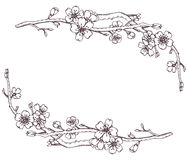 Vector frame with hand drawn graphic branches of a blossoming ch Royalty Free Stock Photography