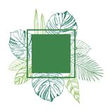 Vector frame with Hand drawn tropical plants. Stock Images