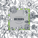 Vector frame with herb and wildflower elements. Vector frame with black and white hand drawn herb and wildflower elements for wedding invitations, birthday cards Stock Photography