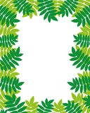 Vector frame. Leafs. Stock Images