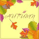 Vector frame with red, orange, brown, green and yellow autumn leaves. stock illustration