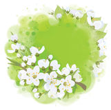 Vector frame,  spring blossoming background. Stock Photo