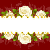 Vector frame whith white roses and golden ribbon Royalty Free Stock Image