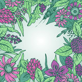 Vector frame with wildflowers and herbs Stock Photo