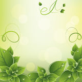 Vector Frame With Green Leaves Royalty Free Stock Photography