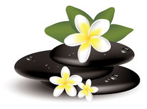 vector frangipani flowers and stones Royalty Free Stock Photo