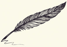 Vector freehand drawing of dark bird feather Royalty Free Stock Image