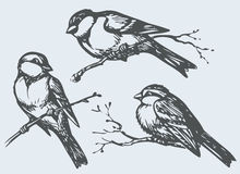 Vector freehand drawing. Tits, sparrows and bullfinches on branc Royalty Free Stock Photo