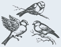 Vector freehand drawing. Tits, sparrows and bullfinches on branc. Vector freehand drawing of series of monochrome sketches Birds. Chickadee, sparrow and Royalty Free Stock Photo