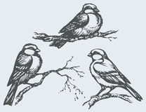 Vector freehand drawing. Tits, sparrows and bullfinches on branches royalty free illustration
