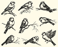 Vector freehand drawing. Tits, sparrows and bullfinches on branc Royalty Free Stock Image