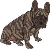 Vector french bulldog Royalty Free Stock Photos