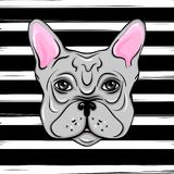 Vector French Bulldog. Illustration of a cute dog wit bow. Carto. On Animals. Funny pictures. Stylish print Stock Photo