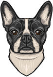 Vector French Bulldog Royalty Free Stock Photography