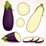 Vector fresh eggplant. Sliced, whole, half aubergine. Eggplant set isolated on white background. Whole, sliced, half of fresh aubergine. Vector illustration stock illustration