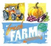 Vector fresh farm Stock Photos