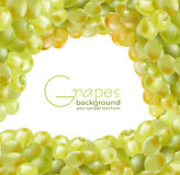 Vector fresh grapes with drops Stock Images