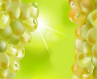 Vector fresh grapes with drops Royalty Free Stock Photography