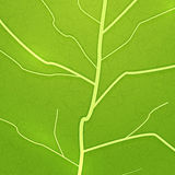Vector fresh green leaf texture Royalty Free Stock Photo