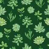 Vector fresh green succulents seamless pattern Stock Photos