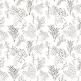 Vector fresh parsley, thyme and rosemary herbs. Aromatic leaves. Used to season meats, poultry, stews, soups, Bouquet granny. Seamless pattern Stock Images