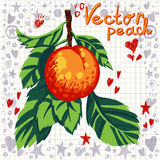 Vector fresh peach with leaves Royalty Free Stock Images