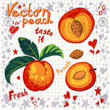 Vector fresh peach with leaves Royalty Free Stock Image