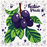 Vector fresh plums with leaves Royalty Free Stock Photo
