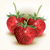 Vector Fresh, Red Strawberry On White Royalty Free Stock Images
