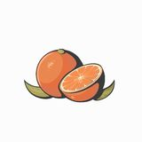 Vector fresh ripe oranges with leaves. Stock Photos