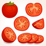 Vector fresh tomato. Sliced, whole, half red tomatoes. Stock Images
