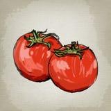 Vector fresh tomatoes Royalty Free Stock Photos
