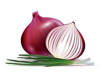 Vector fresh whole and sliced red onion bulbs with green onions close up isolated on white background vector illustration