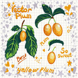 Vector fresh yellow plums with leaves Royalty Free Stock Photo