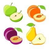 Vector fruit Stock Fotografie