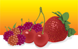Vector fruit Stock Images