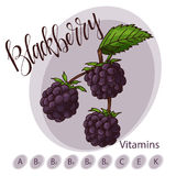 Vector fruit element of blackberry. Hand drawn icon with lettering. Food illustration for cafe, market, menu design Royalty Free Stock Photo