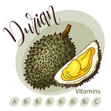 Vector fruit element of durian. Hand drawn icon with lettering. Food illustration for cafe, market, menu design Stock Photo