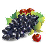 Vector fruit food grape vine fresh Royalty Free Stock Photo