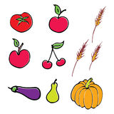 Vector fruit illustration royalty free stock images
