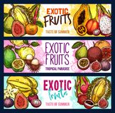 Vector fruit shop sketch banners of exotic fruits Stock Photos