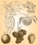 Vector Fruits Royalty Free Stock Photography
