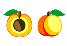 Vector fruits illustration. Detailed icon of apricot, whole and half, isolated over white background Royalty Free Stock Photos