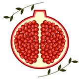 Vector fruits illustration. Detailed icon of cutted pomegranates with leaves, isolated over white background. Stock Photo