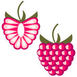 Vector fruits illustration. Detailed icons of raspberry, whole and half, isolated over white background. Stock Photography